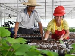 福建將樂縣:生態產業助脫貧